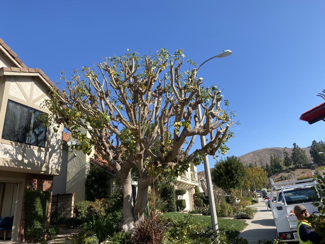 tree-2-before